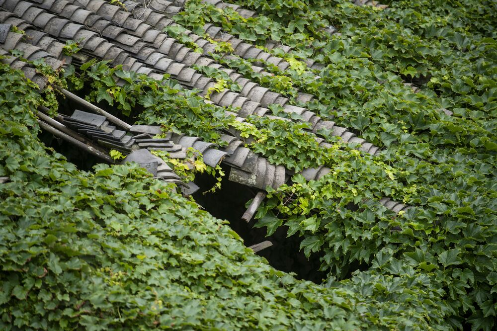 Going Green: Nature Conquers Abandoned Houses on Chinese Island