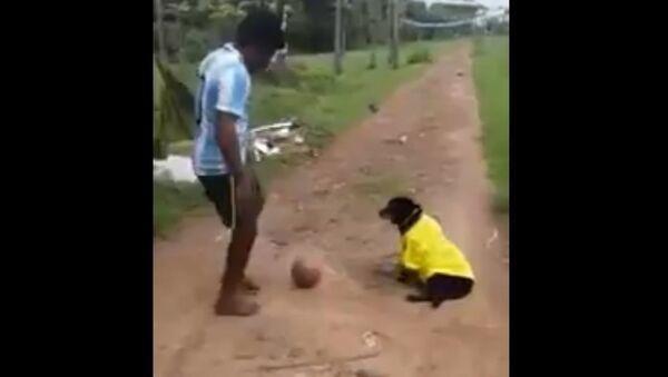 Argentina fan cruelty towards a dog - Sputnik International