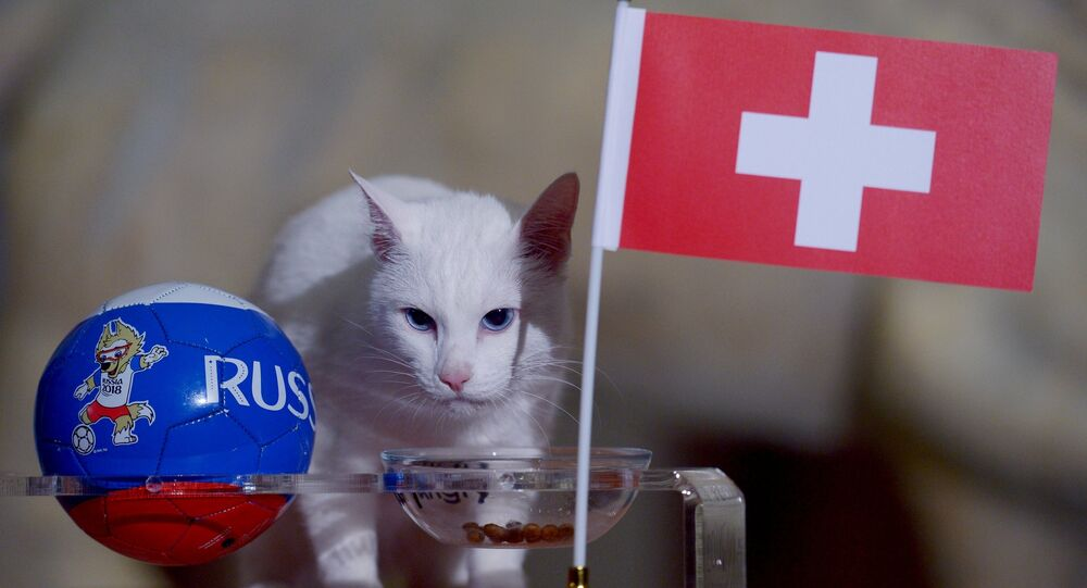 ST. PETERSBURG (Sputnik) - Achilles the cat, who lives at St. Petersburg's Hermitage Museum and serves as the animal oracle for the 2018 FIFA World Cup, predicted Switzerland's victory over Sweden in the round of 16, a Sputnik correspondent reported Tuesday.