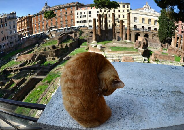 Cat among ancient ruins where Roman general Julius Caesar was assassinated on March 15, 44 BC (File)