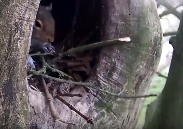 Squirrel Pushes Sleeping Owl Out Of Its Nest