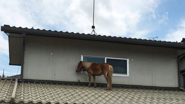 A horse stranded on a rooftop after torrential rain, is pictured in Kurashiki, Okayama Prefecture, Japan July 9, 2018 - Sputnik International