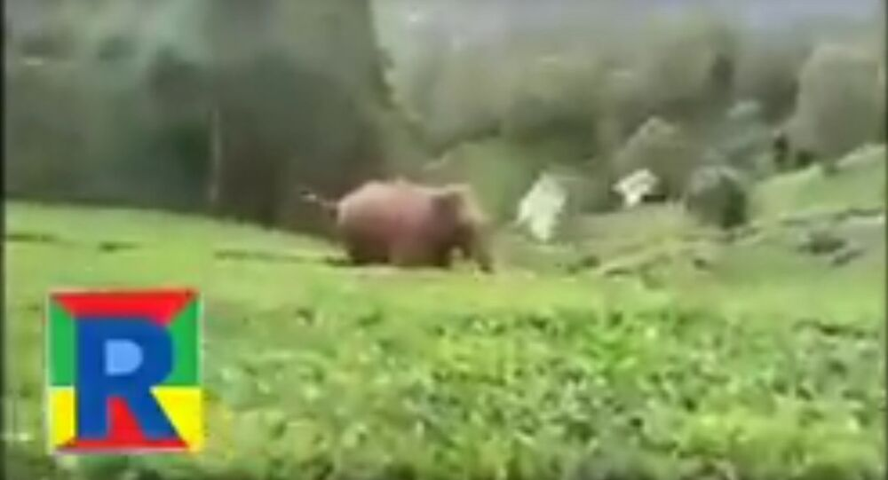 Forest Elephant attack at Nilgiri (ooty)