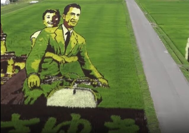 Honoring 'Father' OF Manga With Canvases On Rice Paddies