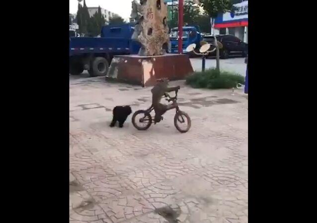 Monkey steal a bike