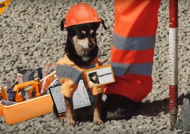 Dog 'Supervises' Road Construction in Chelyabinsk Region