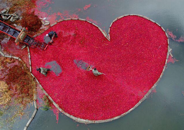 Клюквенное сердце
