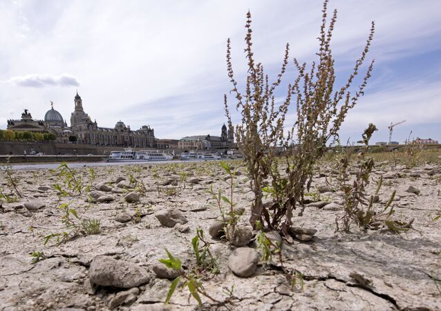 A large part of the Elbe river bed is dried out during a long time of drought in front of the skyline with the Frauenkirche cathedral (Church of Our Lady) in Dresden, Germany, Monday, July 9, 2018.The current water level of the Elbe near Dresden lies at 0,55 meters.