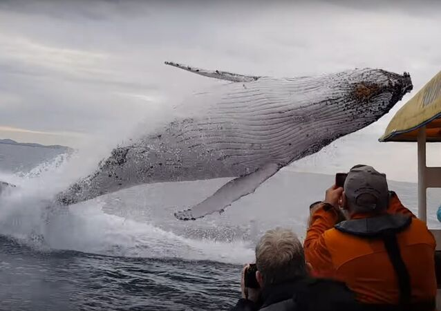 Whale jumps out of nowhere during sight seeing tour