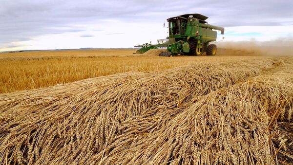 Tara Giles operates a combine as she harvests wheat on a 160-acre field located south of High River, Alberta, September 28, 2013 - Sputnik International