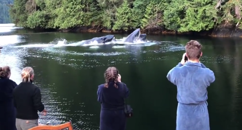 Whales in the Canadian Lake. 2018