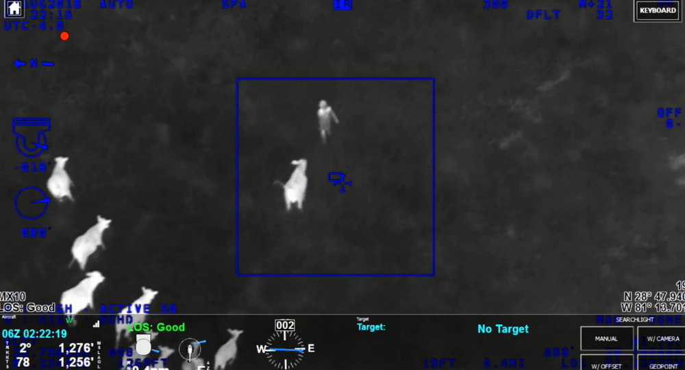 Herd of cows in Florida help officers from the Sanford Police Department locate suspect