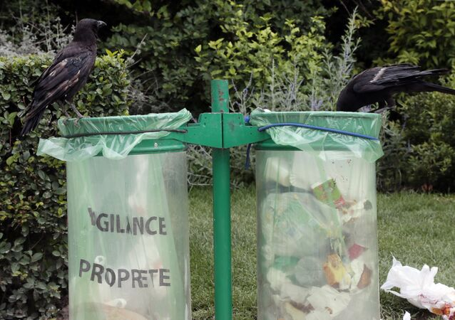 Crows are pictured on public trash cans at the Champs de Mars, in Paris, on June 27, 2012