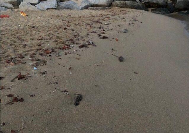 Dead rats are seen on a Barcelona beach