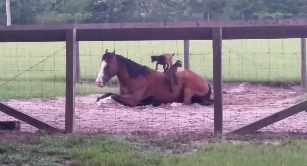 Daycare Duty? Horse Left to Watch Baby Goats