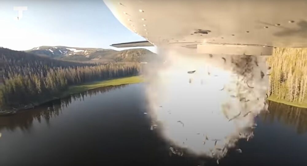 Fish dropped in the high-mountain lakes of Utah