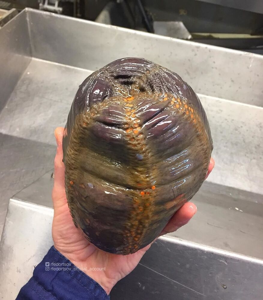 What Lurks Below: Mysterious Deep Sea Creatures Caught Near Russia's Shores
