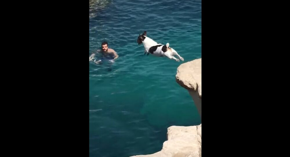 Dog Performs Cliff Dive