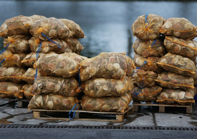 Scallops are stacked up on the dockside at Ouistreham, near Caen in northern France