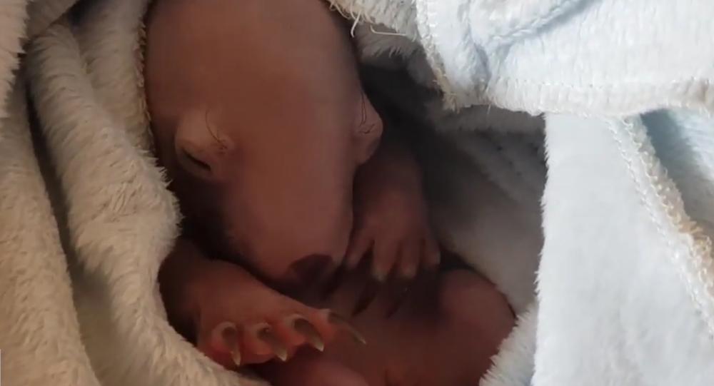Baby Wombat Sleeping