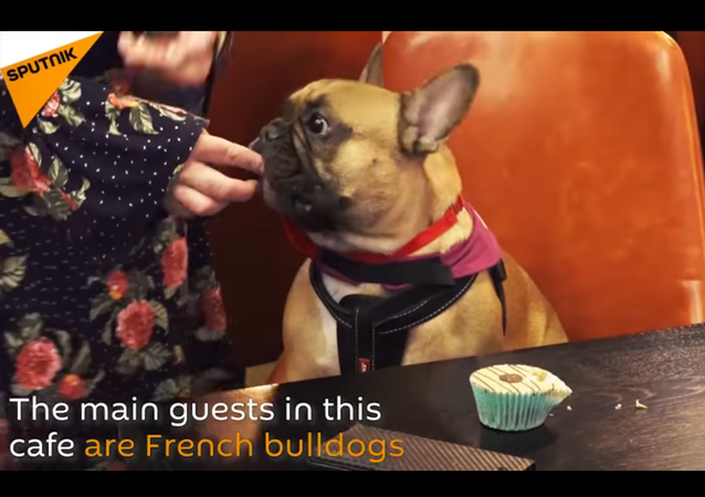 French Bullgod Cafe Opens in London