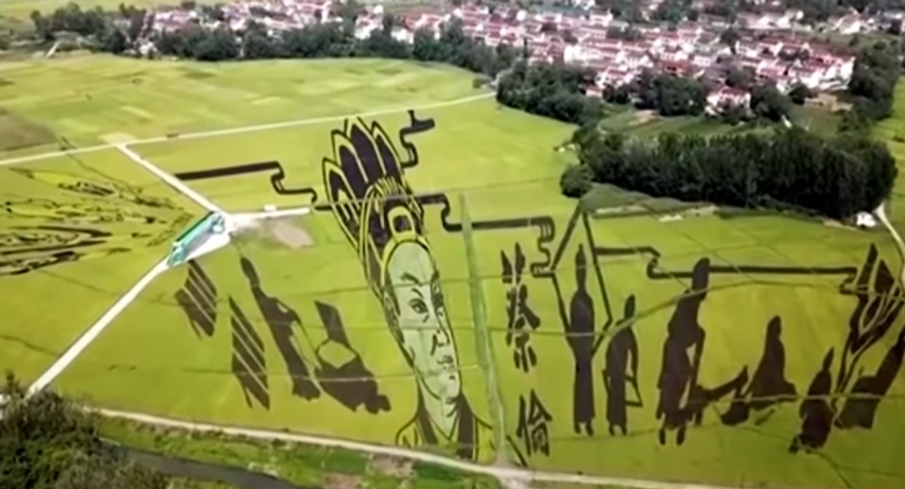 Chinese Farmers Plant Crops to Produce Magnificent Paintings