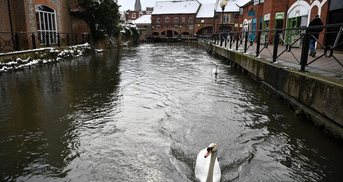 Swans swim along a canal near The Maltings shopping centre in Salisbury