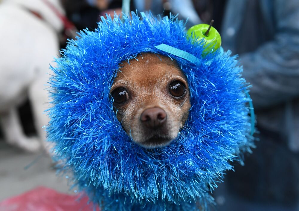 Pet Carnival: Moscow Holds First Parade of Dogs in Costumes