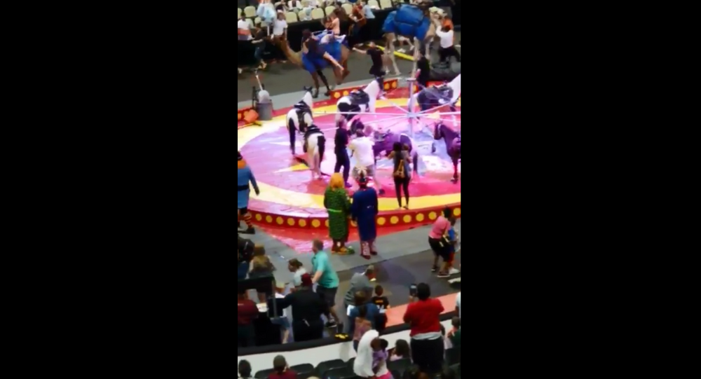 Camel at Syria Shrine Circus performance sends multiple people to hospital with injuries after bucking around the arena