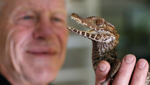 Cold-Blooded Tenants: A French Man Who Owns 400 Reptiles - Sputnik International