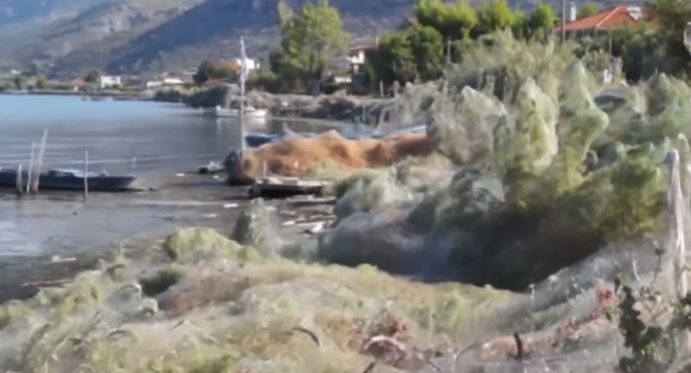 Shocking Giant Spider Web Covers Greek Island's Coast