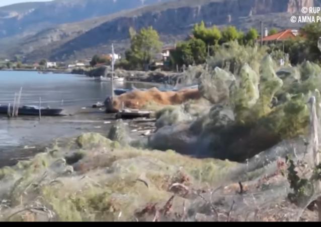 Shocking Giant Spider Web Covers Greek Island's Coast