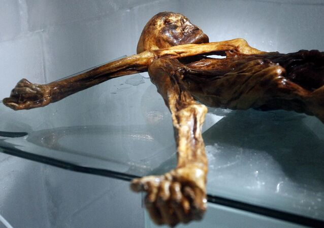The mummy of an iceman named Otzi, discovered on 1991 in the Italian Schnal Valley glacier, is displayed at the Archaeological Museum of Bolzano on February 28, 2011 during an official presentation of the reconstrution