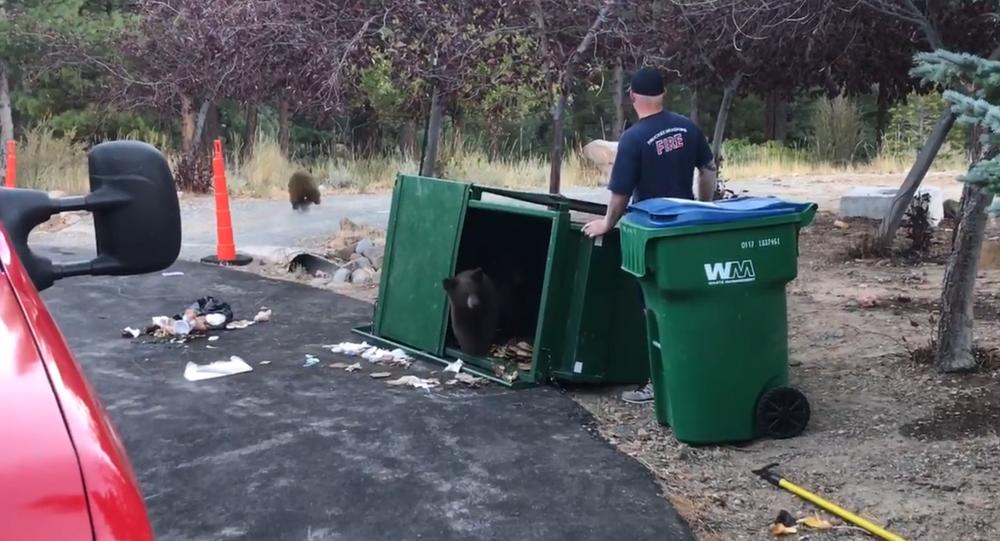 No Goldilocks: Fireman Frees Brown Bear Trio From Overturned Dumpster