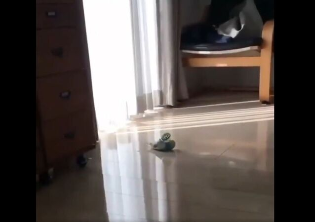 Parrot Does Morning Workout Routine