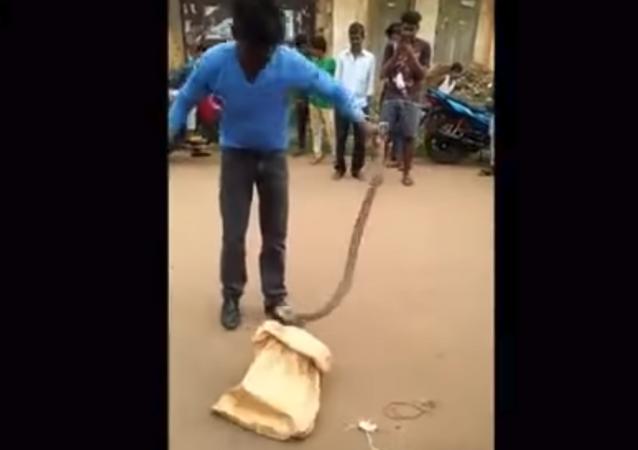 Amateur snake rescuer gets bitten in Odisha, India