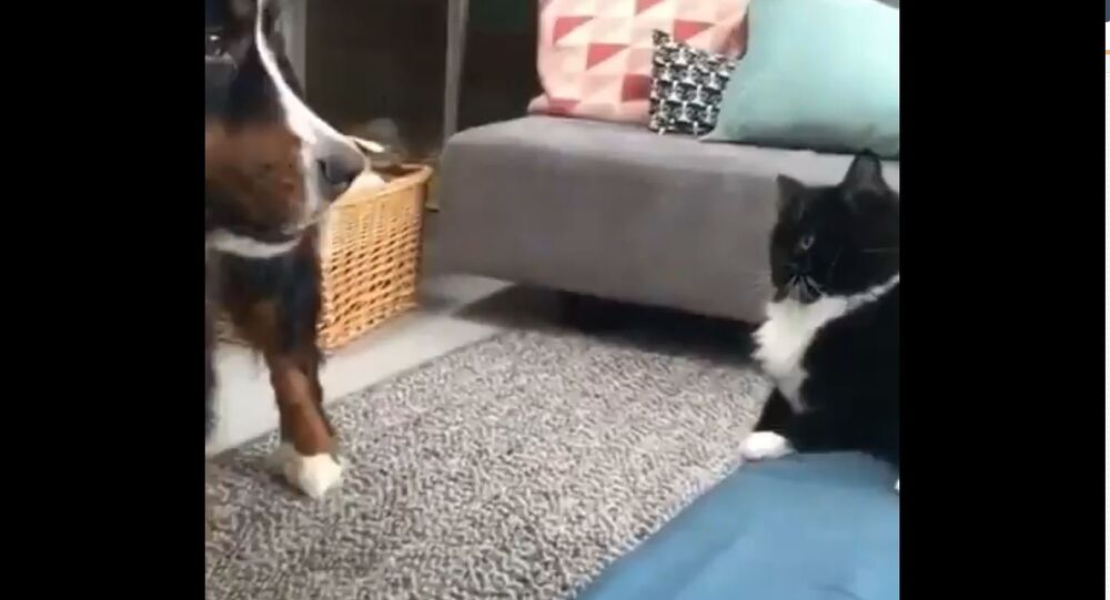 Love-Hate Relationship: Cat Strikes Back