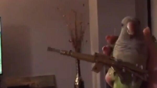 Parrot the Gunman - Sputnik International