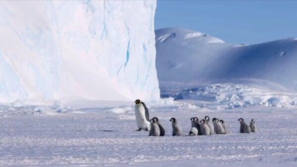Penguins - Sputnik International