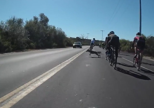 Cyclist and Coyote Close Call