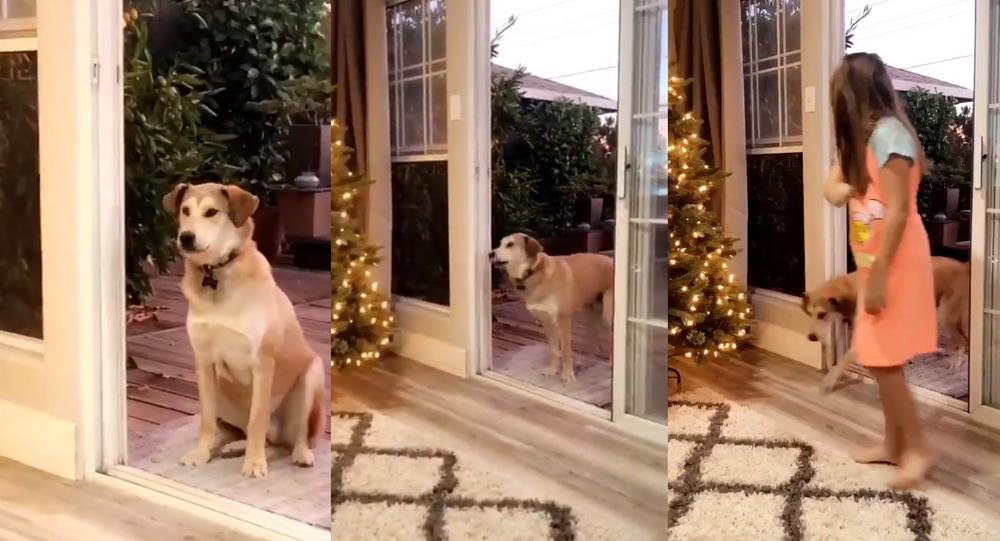Pup Patiently Awaits Imaginary Door's Opening
