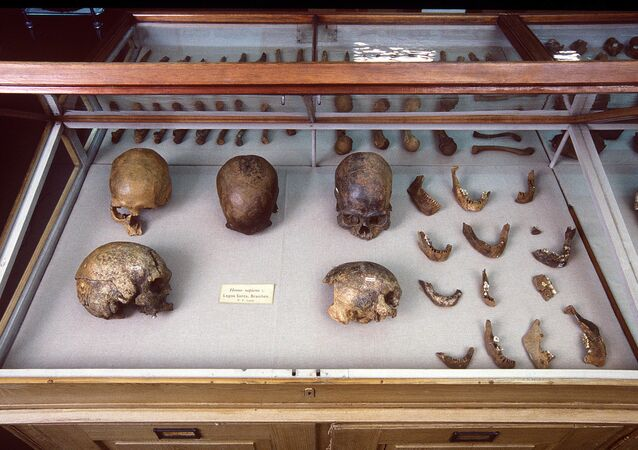 Skulls and other human remains from PW Lund's collection from Lagoa Santa, Brazil, kept in the Natural History Museum of Denmark