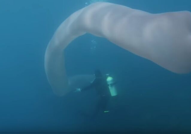Divers Encounter Strange Deep-Sea Worm Over 8m Long