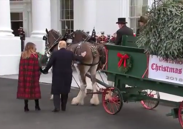 US President Donald Trump pats the bottom of one of the White House Christmas Tree's delivery horses