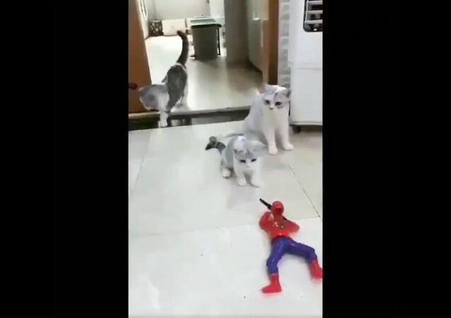 Cat vs Toy