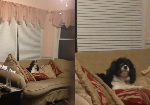 'Well, This Is Awkward': Howling Hound Finds Out He's Not Home Alone