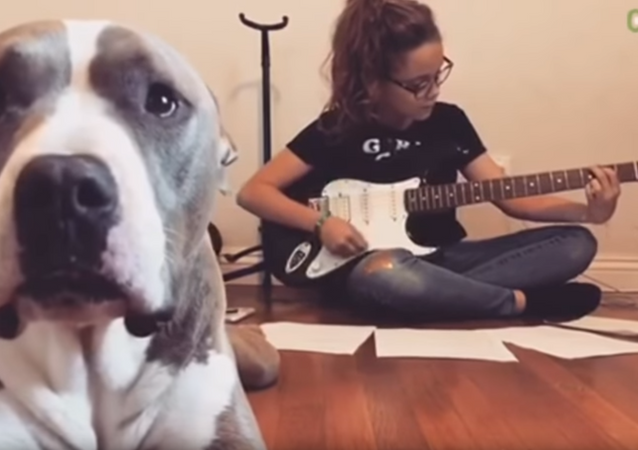 Canine Critic: Pit Bull Protests Music, Advocates for Attention