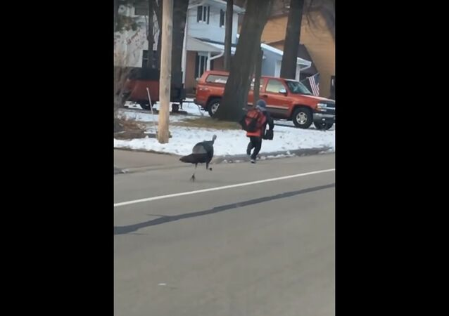 Turkey Chases Boy Down the Street