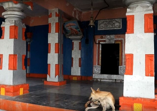 Dog sits inside Naradagadde Hindu temple in Karnataka