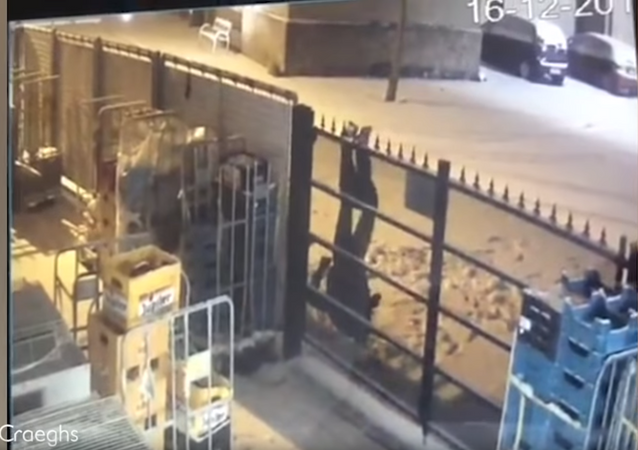Hungover? Belgian Beer Burglar Gets Snagged, Pantsed by Fence